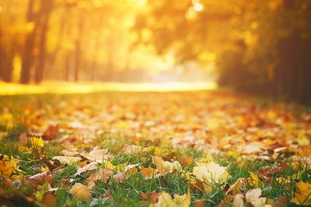 This Season, Replenish Your Soil by Mulching Fallen Leaves