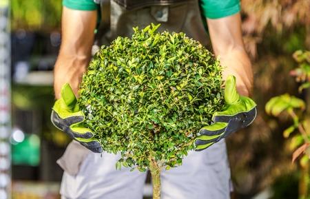 Spring Landscaping Tips You Should Consider