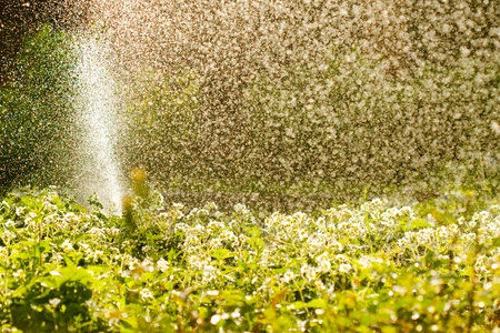 How to Save Water in Your Lawn and Garden