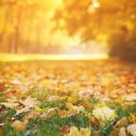 Mulch Fallen Leaves to Improve the Health of Your Lawn