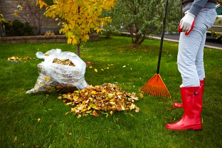 Now Is the Perfect Time to Tackle A Fall Yard Cleanup