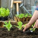 How to Prepare Your Garden's Soil for Planting