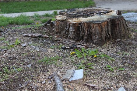 Tree Stump removal with Lawrence Tool Rental