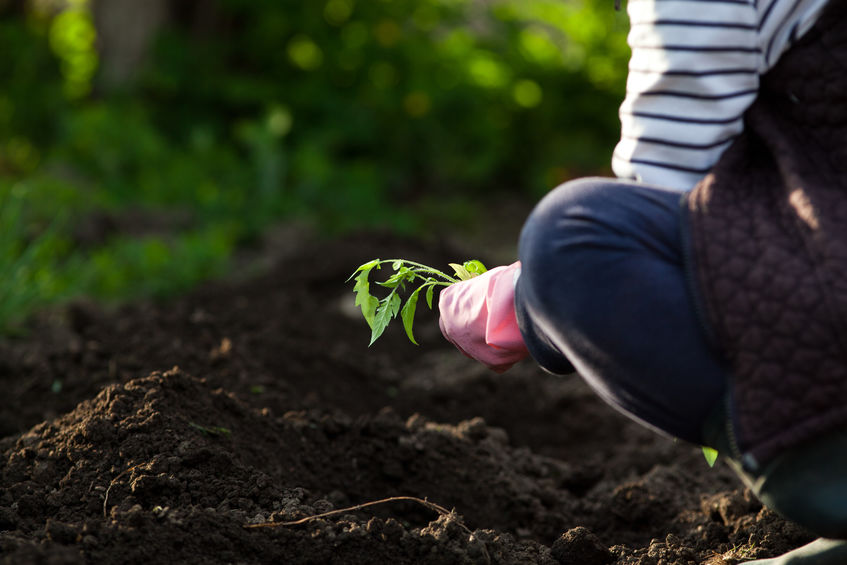 How to Turn Your Soil into the Perfect Home for Your Garden