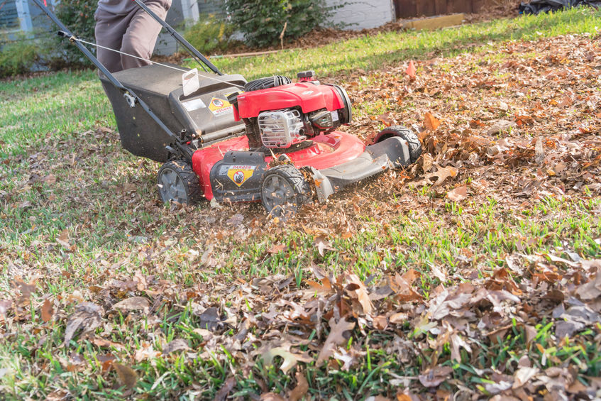 Using Fallen Leaves to Mulch Your Soil
