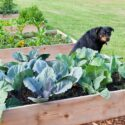 Are Raised Gardens Better Than In-Ground Gardens?